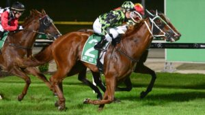 He's A Gold Digger will attempt to stay unbeaten in Australia at Friday night's Cranbourne meeting. Picture: Racing Photos via Getty Images