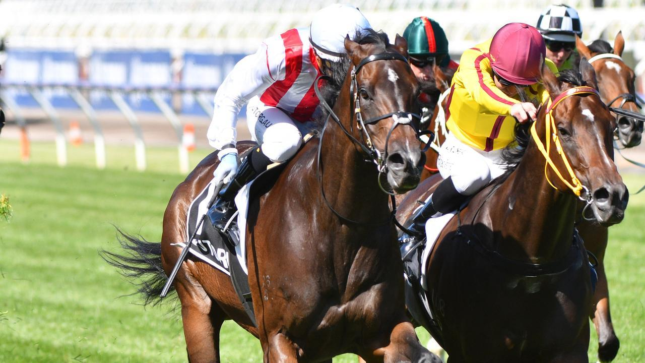 Zoutori will chase a second Group 1 win in Saturday's All Aged Stakes at Randwick. Photo: Vince Caligiuri/Getty Images.