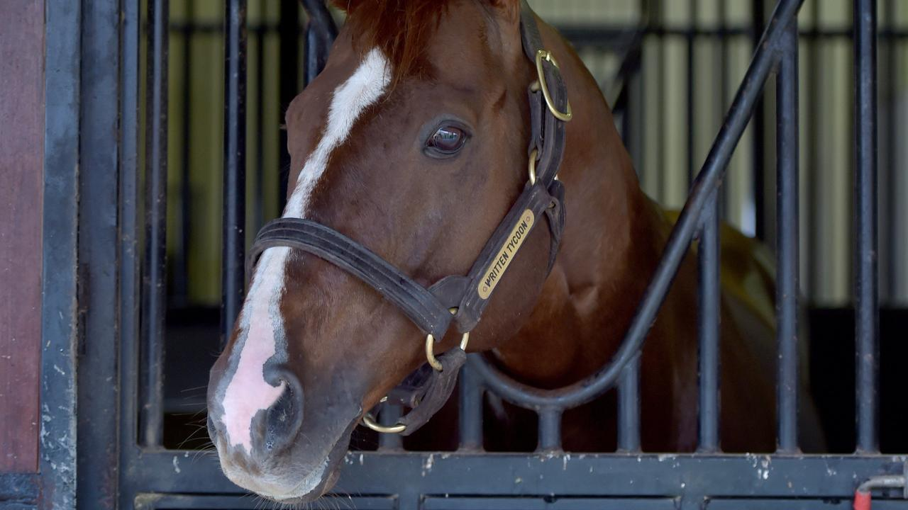Top Australian stallion Written Tycoon during his days at Woodside Park. Picture Jay Town.