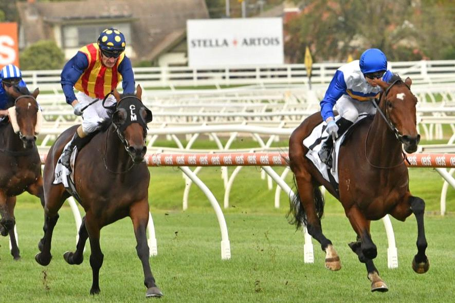 Exciting stayer Liqueuro just keeps on winning.