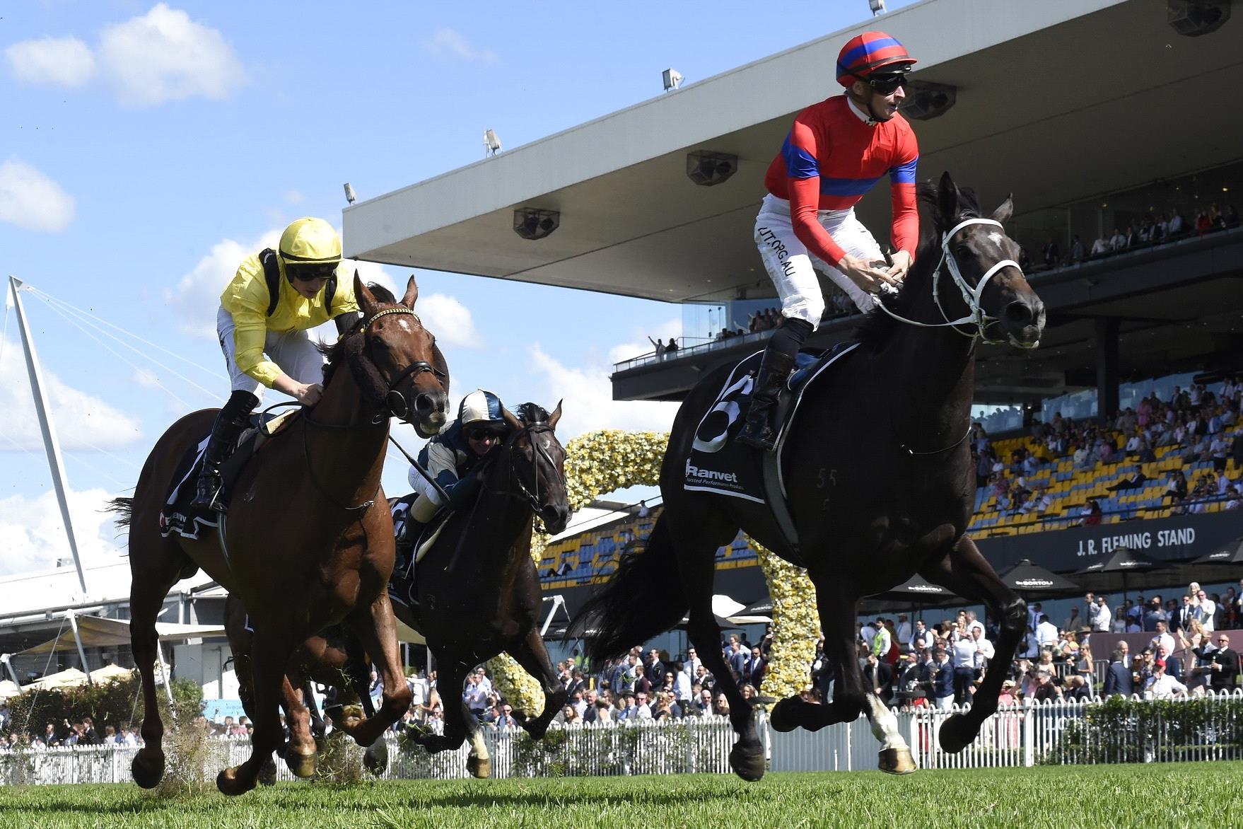 Verry Elleegant outpoints Addeybb in the Ranvet Stakes.
