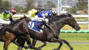 Ironclad's three starts in Australia have all been wins. Picture: Atkins Photography