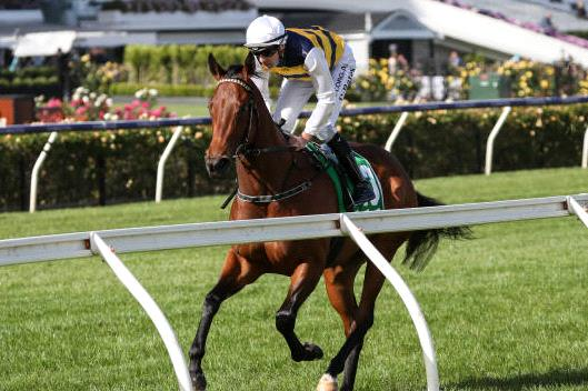 Expecting this mare to be prominent in the Coolmore Classic