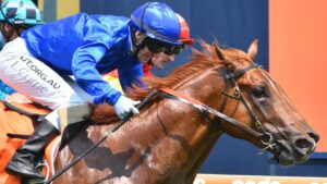 Last year's Blue Diamond Stakes runner-up Hanseatic will tackle the Group 1 Oakleigh Plate first-up. Photo: AAP Image/Vince Caligiuri.