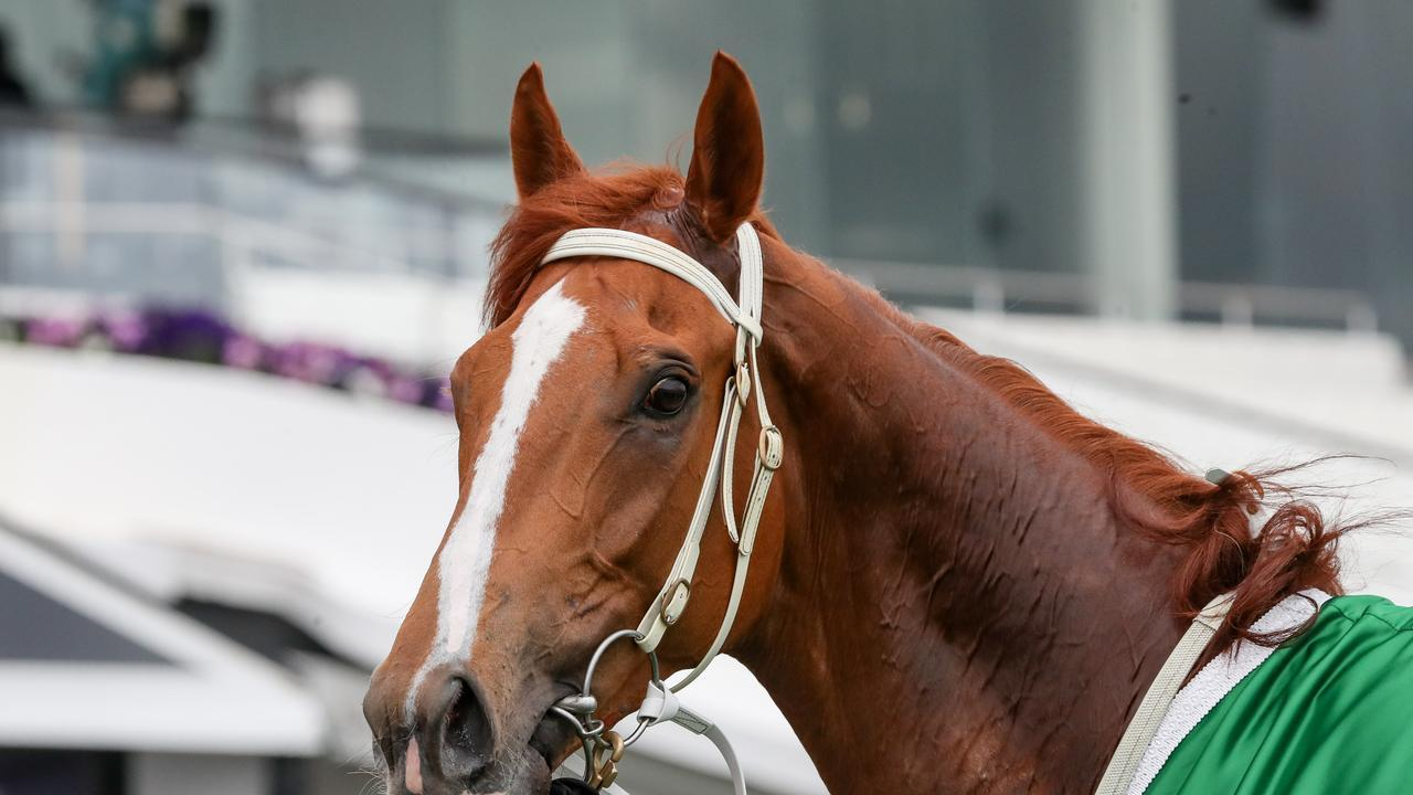 The Pro Punter is expecting Kemalpasa will be winning again at Sandown. George Salpigtidis/Racing Photos via Getty Images