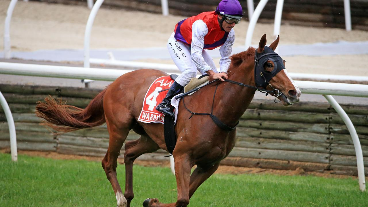 The 2019 Victoria Derby winner Warning will have a crack at a second Group 1 win in Saturday's Caulfield Cup. Picture: Mark Stewart