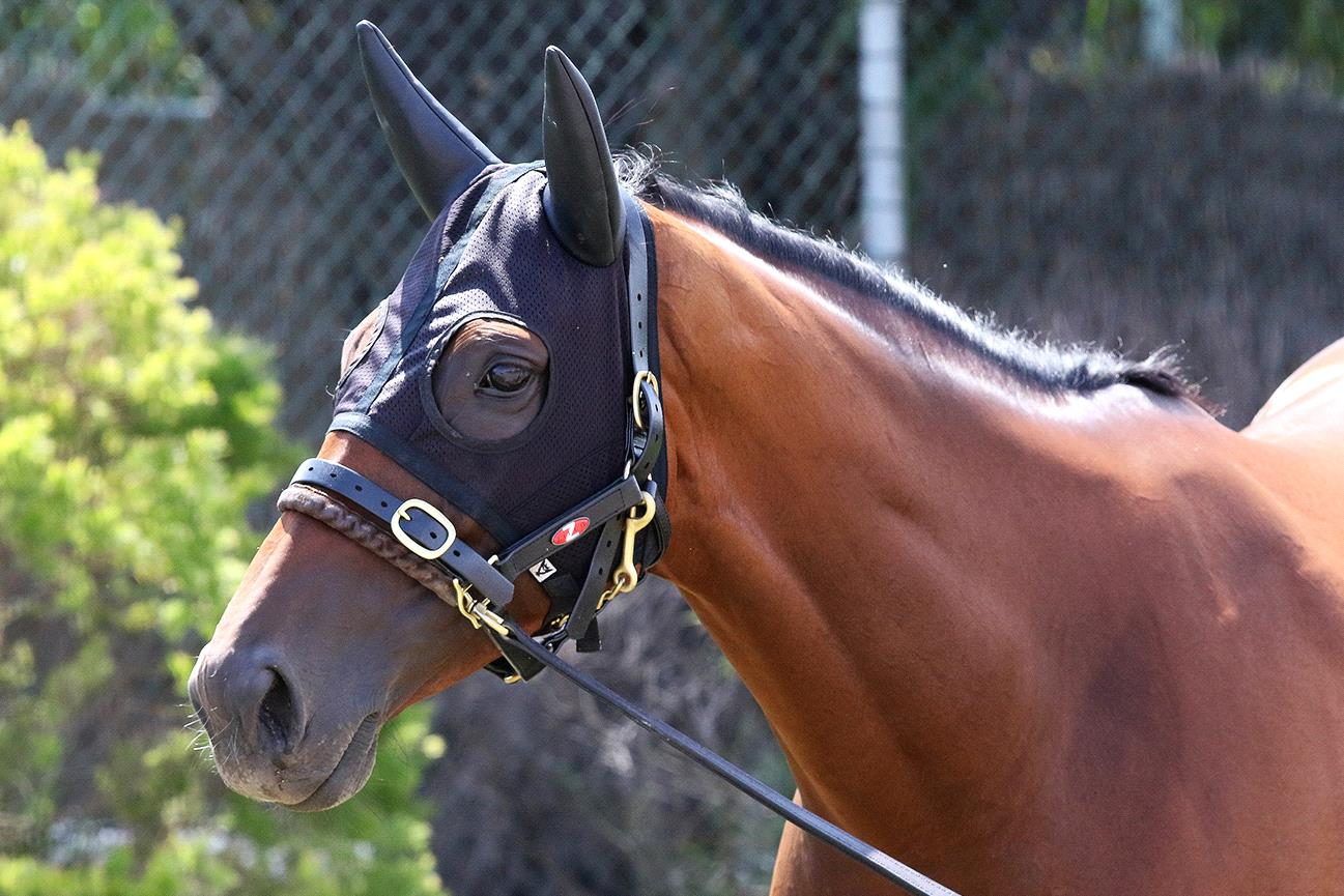 Melody Belle is likely to head back to New Zealand after two Sydney runs.