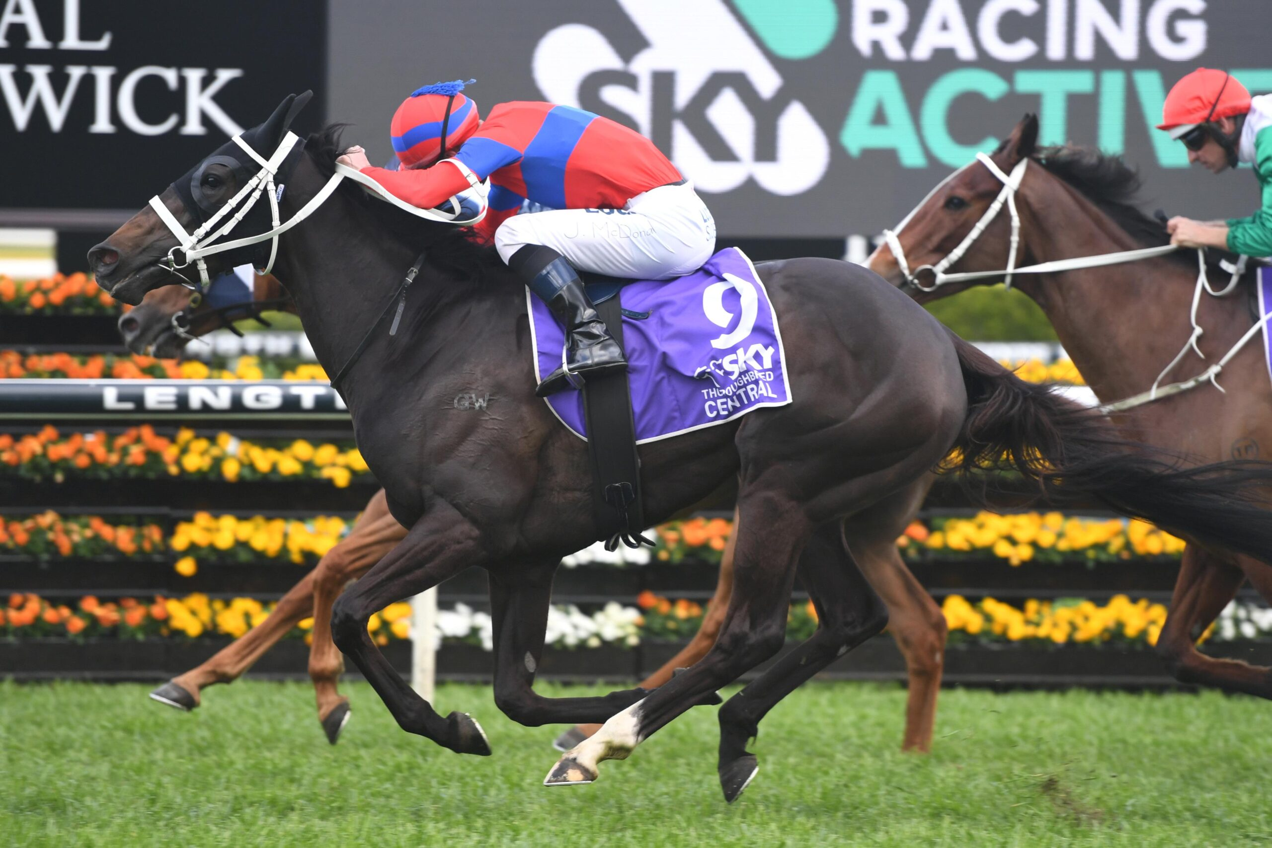 Verry Elleegant was backed into favouritism for the Winx Stakes.