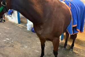 Melody Belle has developed a rash in the lead up to the Missile Stakes.