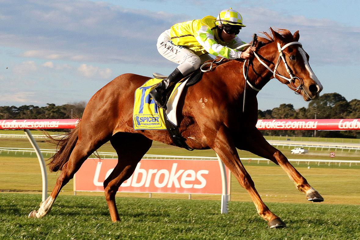 Eduardo will be in action at Caulfield on Saturday.