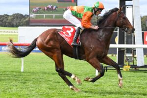 The John McArdle-trained Hydro Star scored an easy debut win at the Sandown Hillside track.