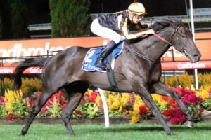 Nonconformist is set to win his way into the Caulfield Cup.