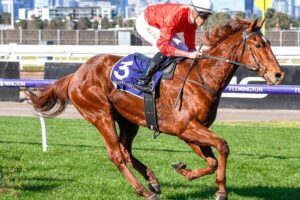 Flashbacks to a closely related champion with the win of Cherry Tortini at Flemington yesterday.