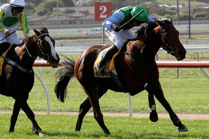 Zed Em will trial over steeples at Warrnambool on Tuesday.
