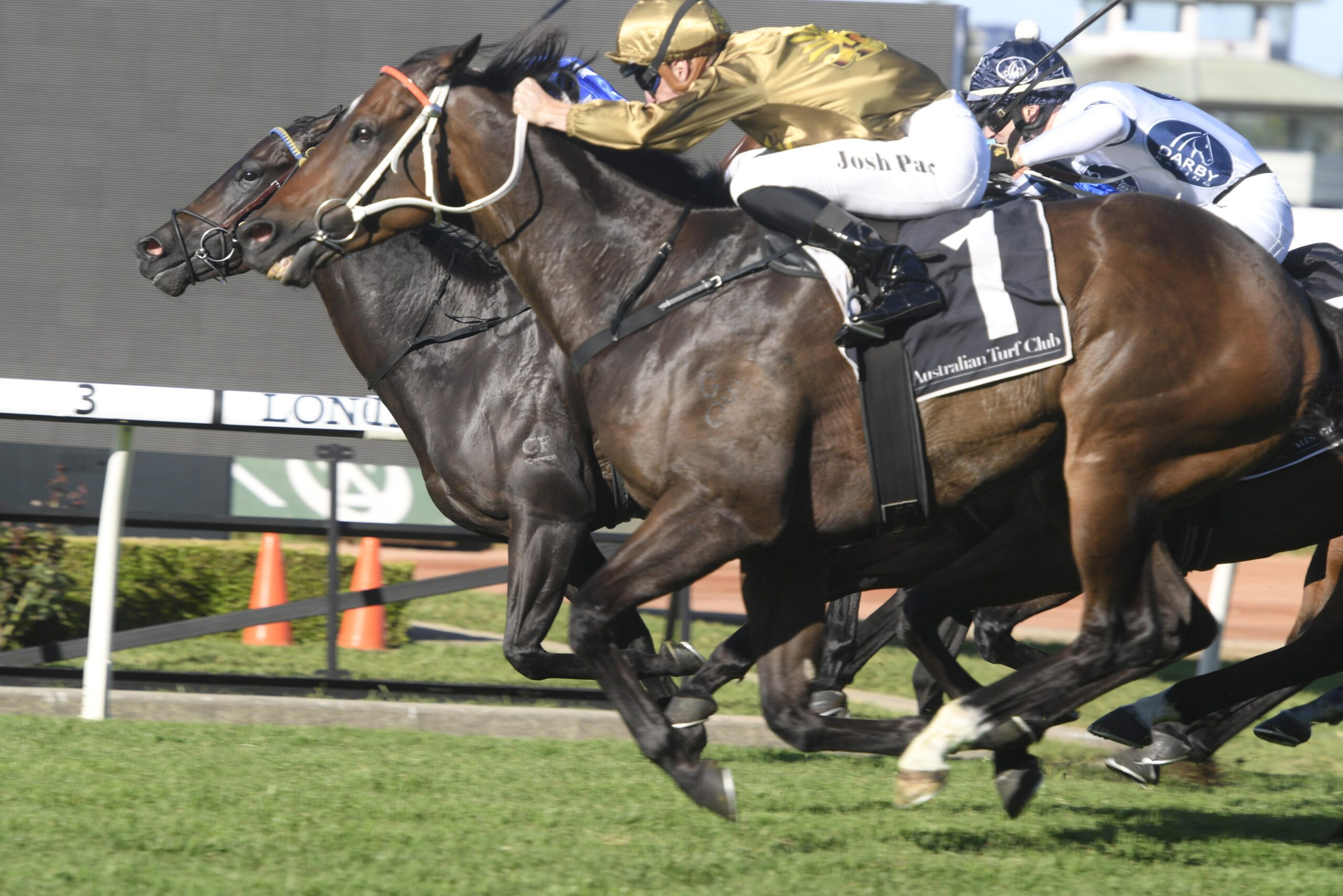 Tactical Advantage flies home to win the Hawkesbury Rush.
