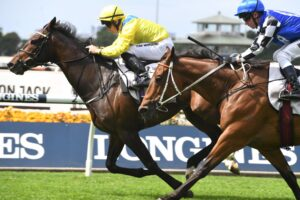 Young Rascal is the favourite for the Sydney Cup.