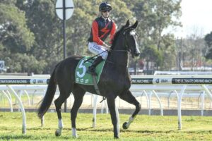 Awesome Pluck prior to racing at Warwick Farm.