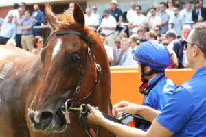 Hanseatic has drawn barrier one for Saturday's Blue Diamond Stakes.