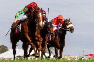 Expecting these colours to be first past the post in the Ballina Cup on Friday