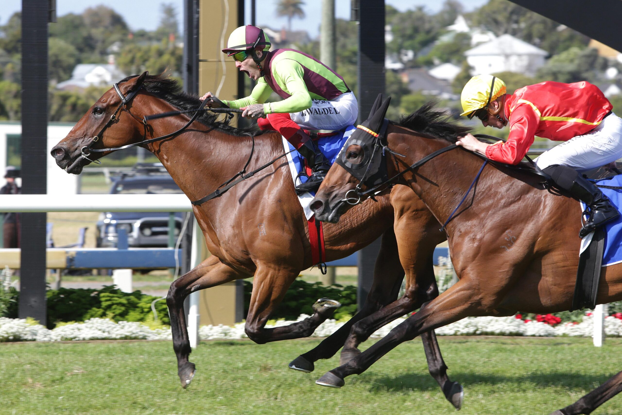 Jason Waddell celebrates his win on Julius in the Group I Railway at Ellerslie.