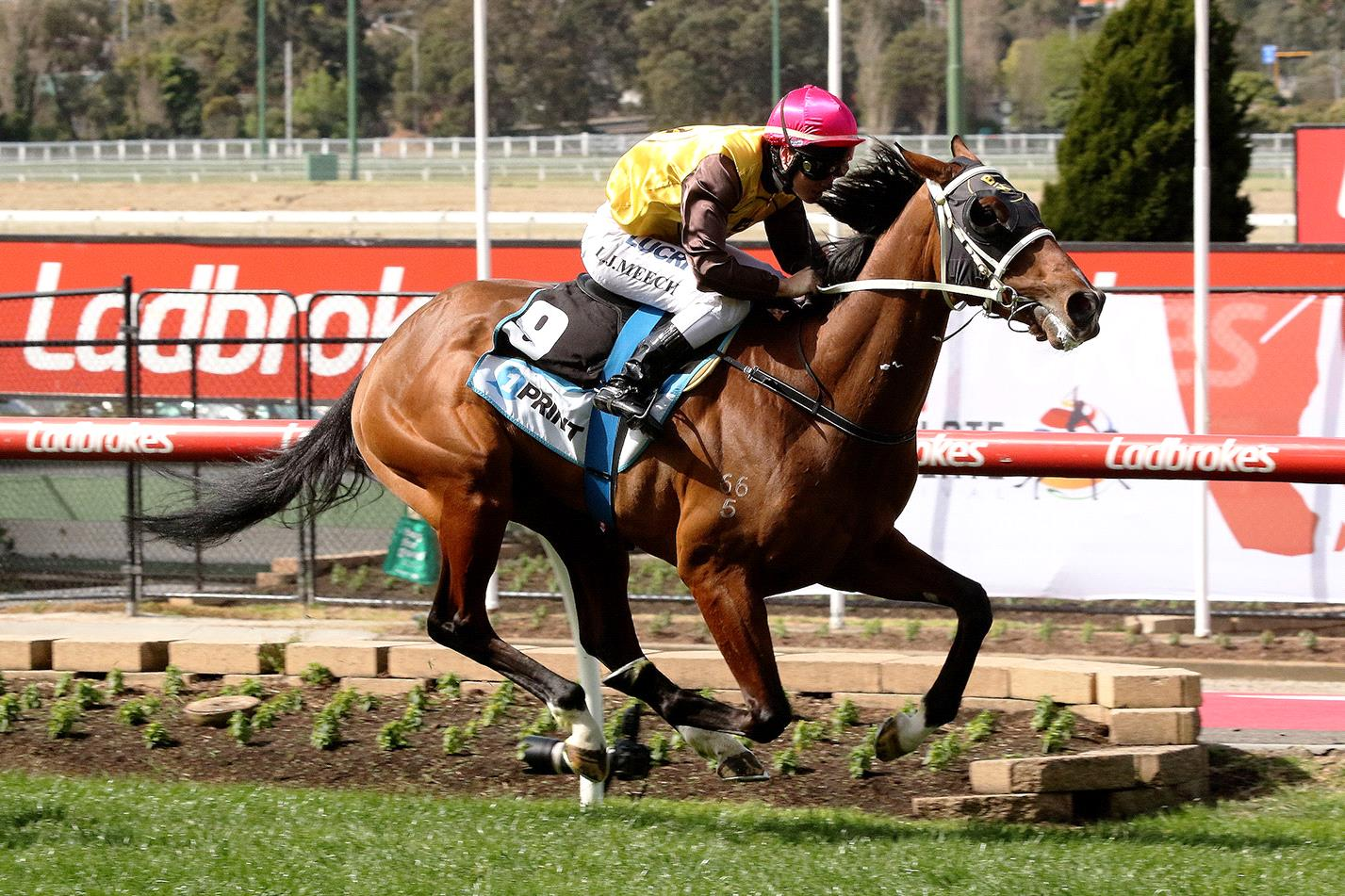 A repeat of a perfect ride would see Tavirun incredibly tough to catch again.