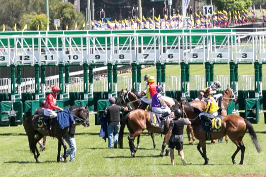 Gosford will host a big card of racing on Saturday.