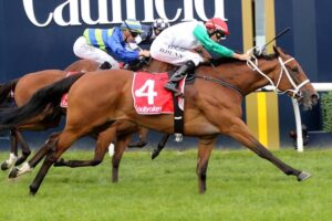 Life Less Ordinary holds a ballot exemption for Saturday's Doomben Cup.