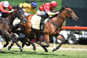 Madison County will aim to get back on the winner's list in the Tulloch Stakes.