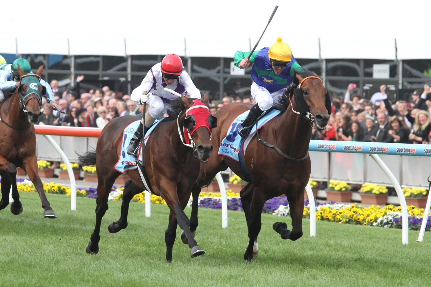Ocean Park defeats All Too Hard and Pierro in the 2012 Cox Plate.