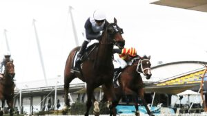 Sweet Thomas can show his best over the 3200m of the Brisbane Cup. Picture: Getty Images