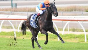 Four Leaf Riot was an impressive debut winner at Kilmore and gets back on to wet ground at Mornington on Monday. Picture: Racing Photos.