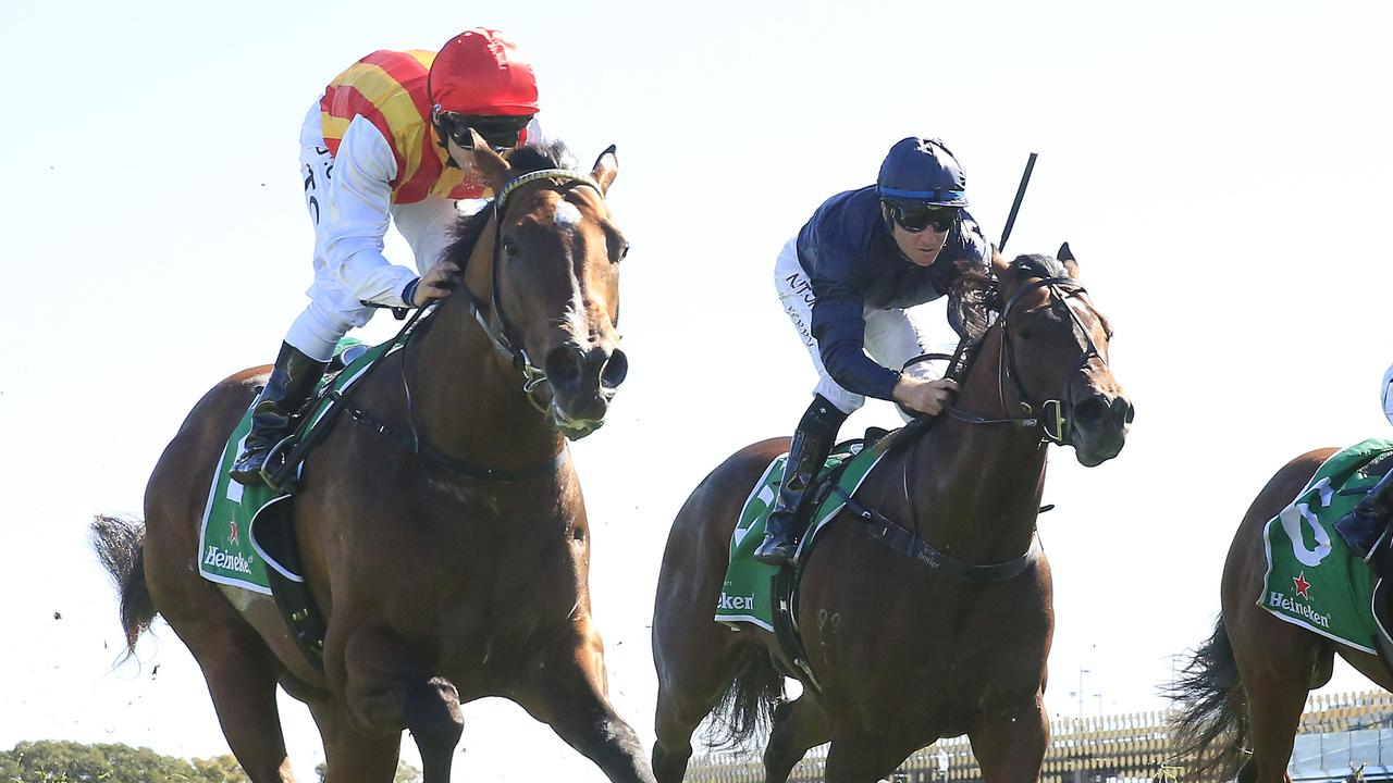 Jet Propulsion (navy blue) chases home Peltzer in the Stan Fox Stakes in October last year. Photo: Mark Evans/Getty Images.
