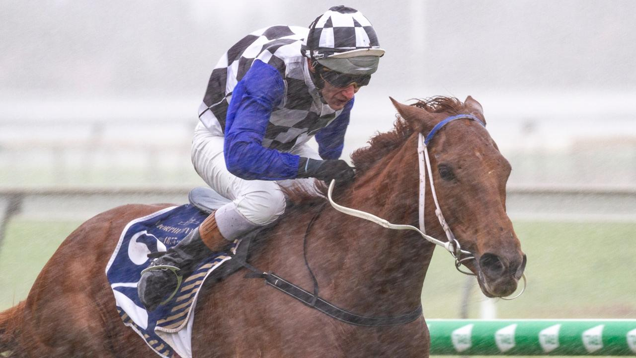 Paul Gatt on Not Usual Glorious at Morphettville. Picture: Atkins Photography