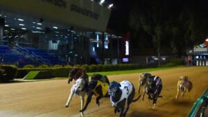 ST Greyhounds page. David Burnett's brilliant sprinter Simon Told Helen winning this year's Group 1 Harrison Dawson Final at The Meadows in Melbourne. Photo Credit: Clint Anderson.