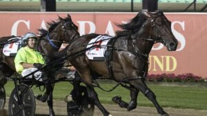 Dual Miracle Mile winner King Of Swing is the favourite for the 2021 Inter Dominion. Picture: HRNSW
