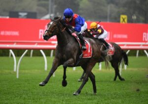 Zaaki strides to an easy win in the Tramway Stakes. Photo: Steve Hart.