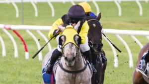 Jess Eaton gets Ecumenical at Morphettville. Picture: Atkins Photography