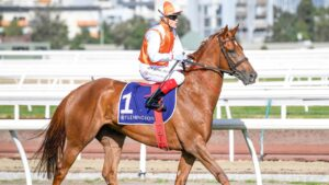 Vow And Declare at Flemington under jockey Craig Williams. Picture: AAP Image—Supplied by Reg Ryan, Racing Photos.
