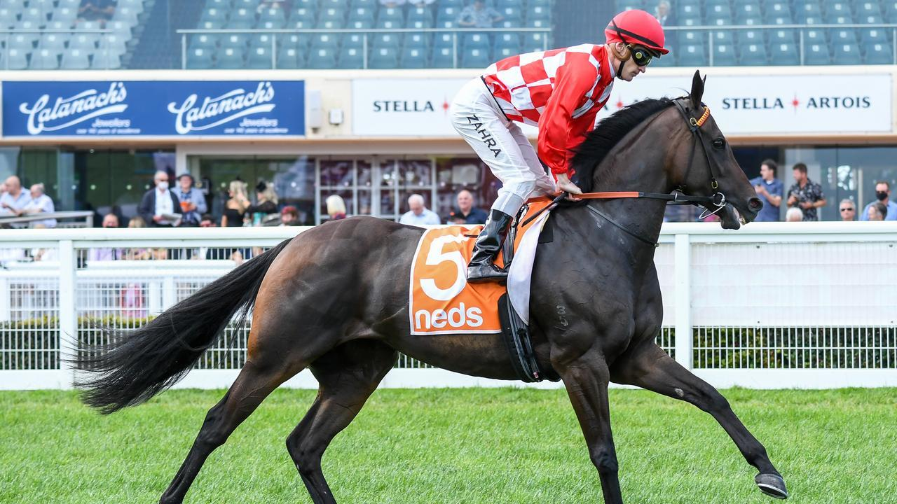 Mizzy is bound for Adelaide. Photo: Brett Holburt/Racing Photos via Getty Images