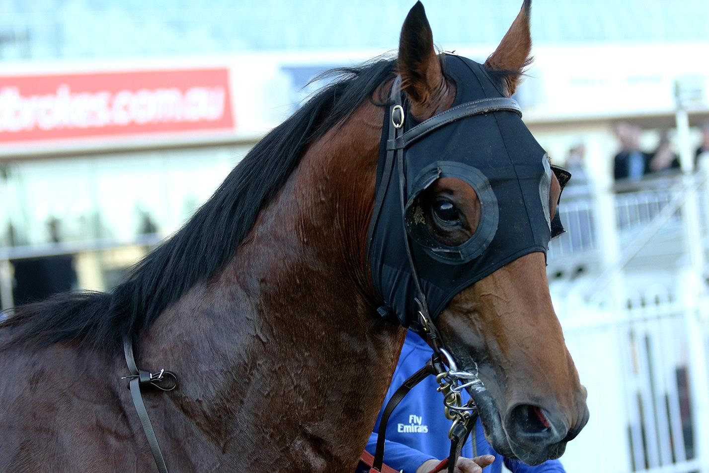 Bivouac can bounce back into the winner's list on Saturday.
