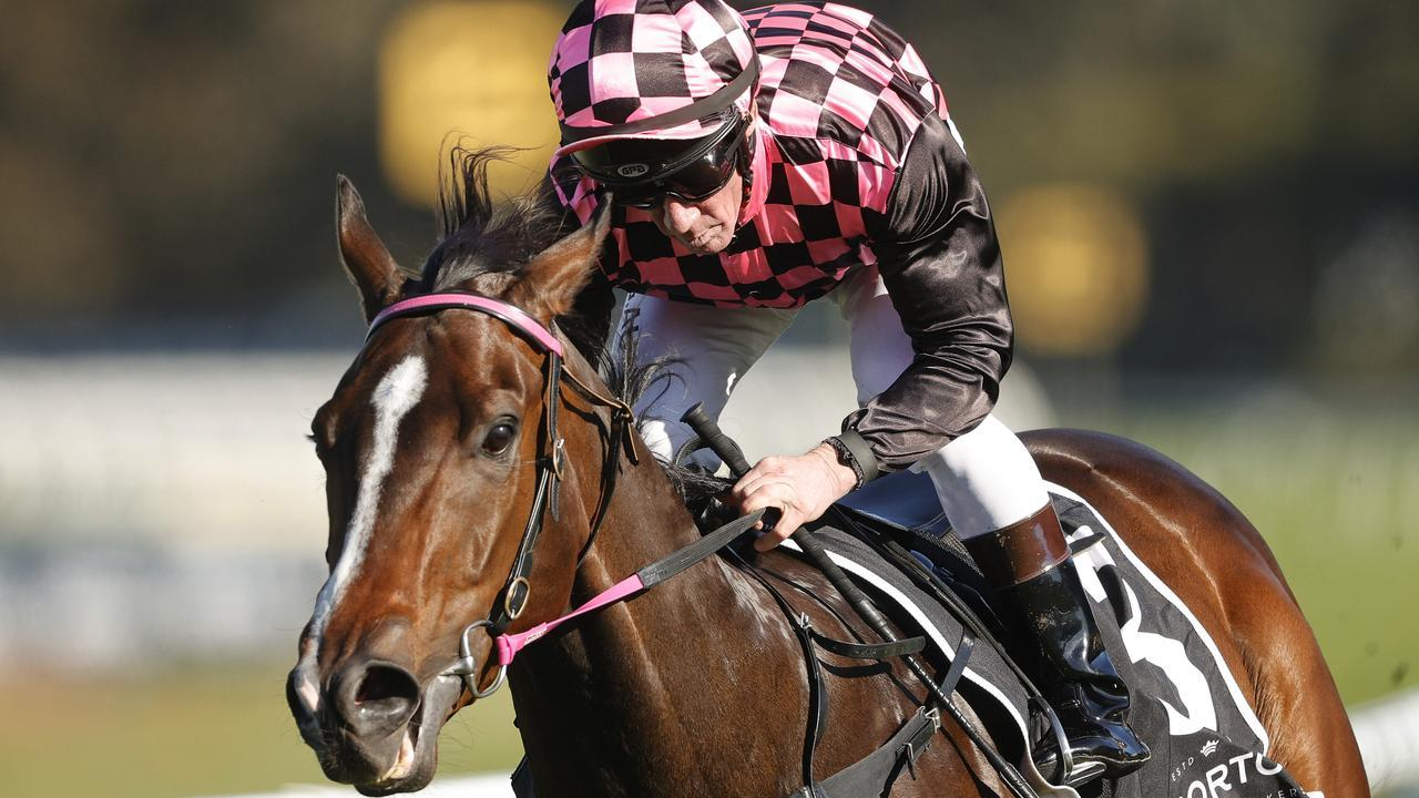 Queensland speed machine Rothfire will begin light exercise next week. Picture: Getty Images