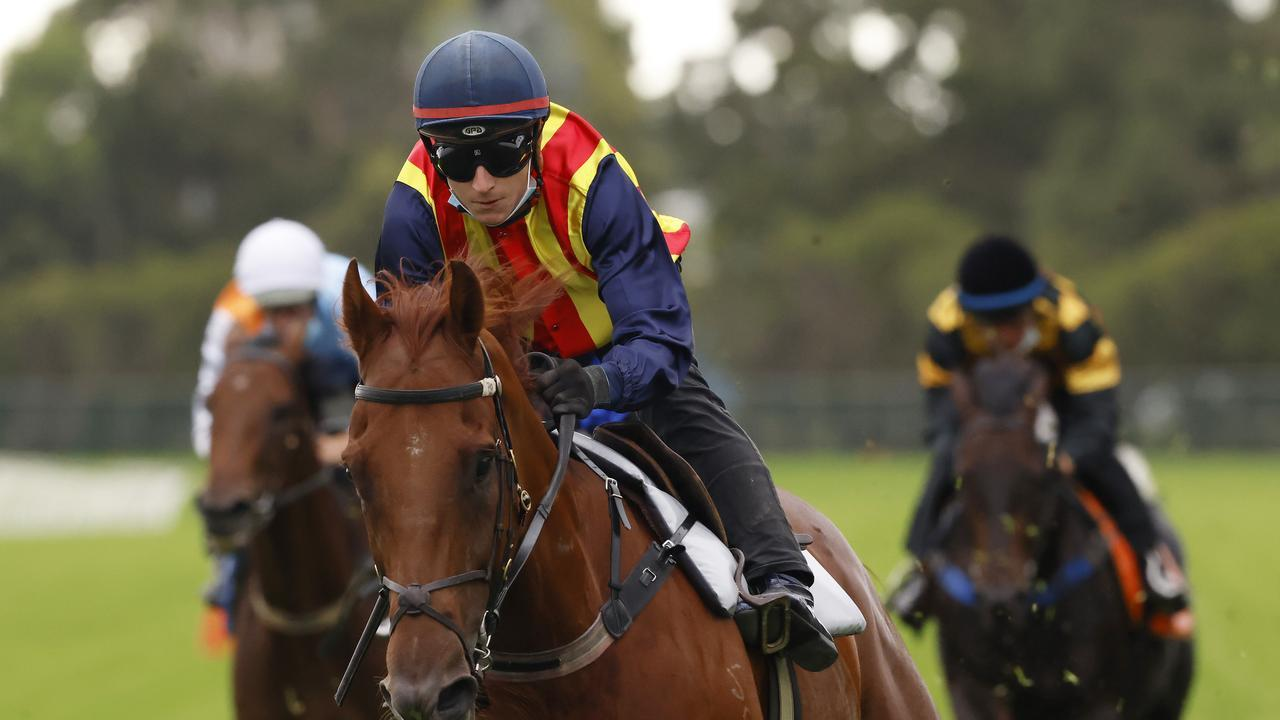 Nature Strip narrowly won a Rosehill trial on Monday. Photo: Mark Evans/Getty Images