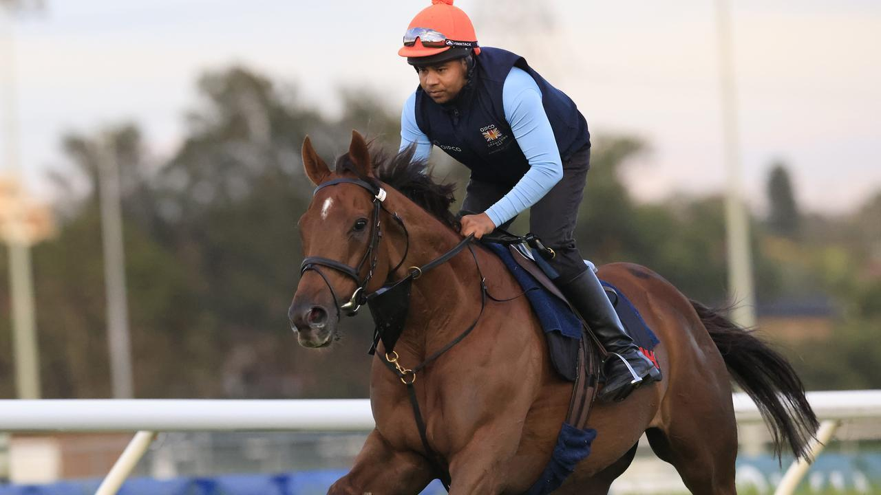 Addeybb goes through his paces for track rider Safid Alam at Canterbury. Photo: Mark Evans/Getty Images.