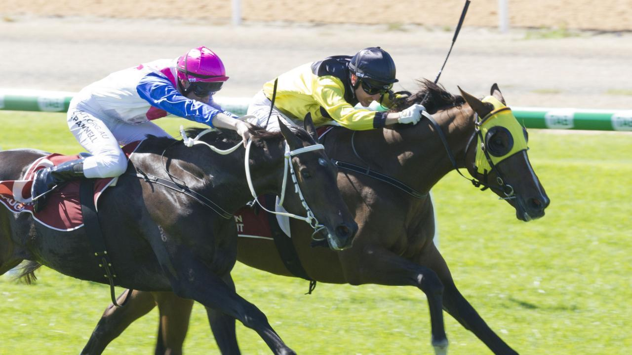 Master Of Zerprise heads to Morphettville on Saturday. Picture: Atkins Photography