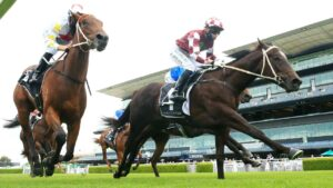Rocket Tiger's form is hard to fault heading into the Black Opal Stakes. Picture: Getty Images