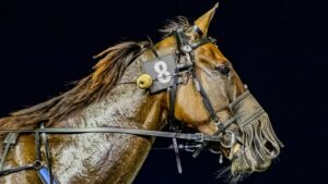 Minstrel was the mystery horse accompanying star gallopers Arcadia Queen and Rgeal Power on a flight to Melbourne. Photos: Hamilton Content Creators