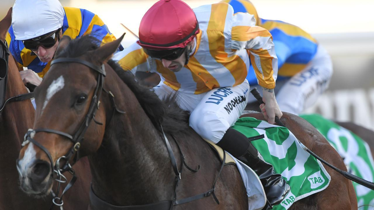 I Am Vinnie will attempt to reproduce his strong Sydney form in Saturday's Chester Manifold Stakes at Flemington. Picture: AAP