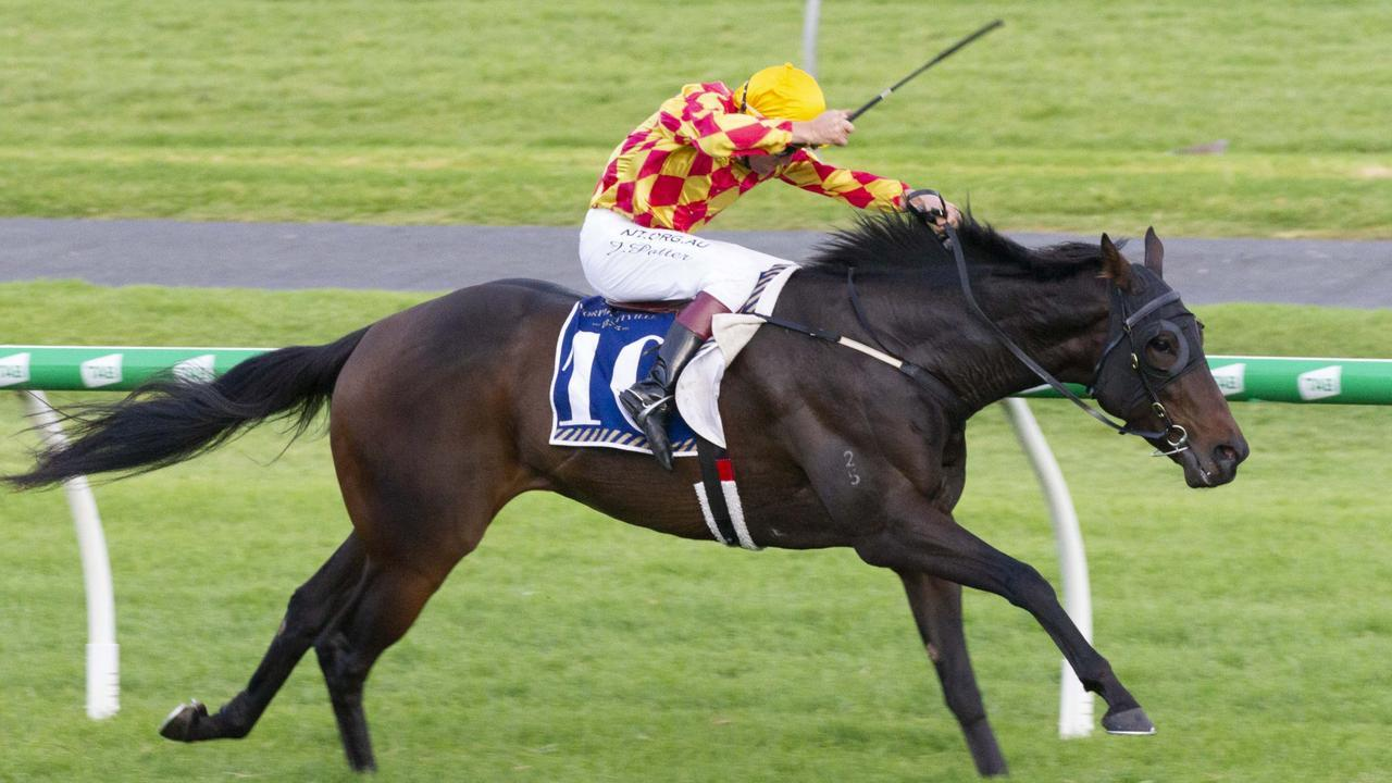 One More Jack will chase successive Listed race wins when he contests the Christmas Handicap at Morphettville. Picture: Atkins Photography