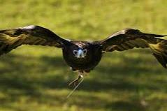 Expecting an Eagle to provide a ripper result in the last at Grafton