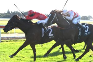 Military Zone holds out Trope in the Hawkesbury Guineas.